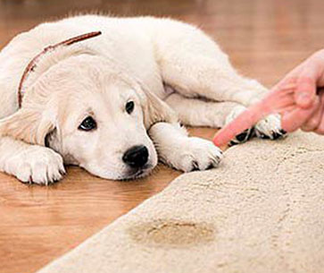 Pet Stain Removal Cabot